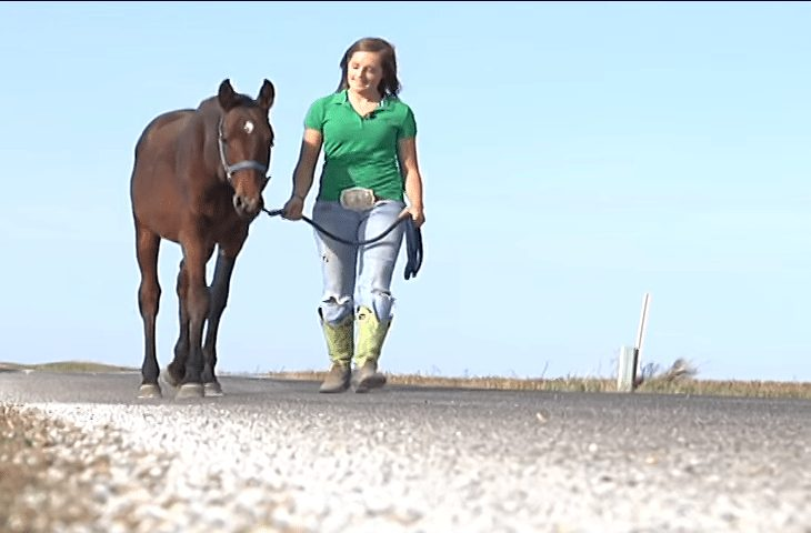 Teenage girl finds dying of starvation horse on her route and walks with the horse 9 miles back home