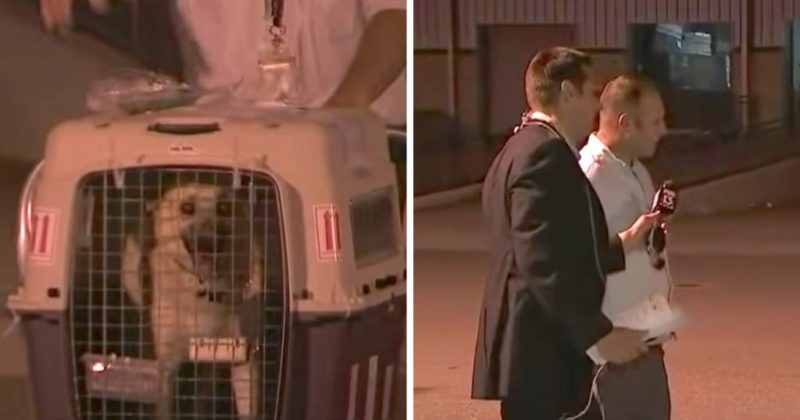Heartwarming moment soldier reunites with the dog he saved and adopted in Iraq on live TV