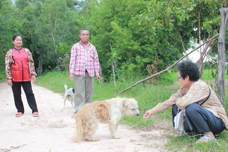 Loyal dog waits for his humans four years in the same spot where he lost them