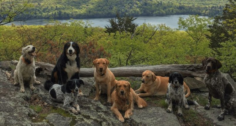 Heroic dog sacrifices himself protecting his owners' and dog friends' lives from bear attack