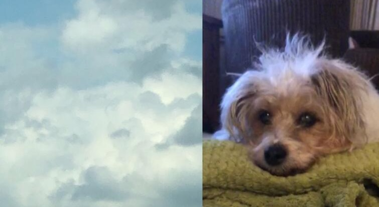 The girl saw her dog in the sky a couple of hours after pet's death, and she is not the only one