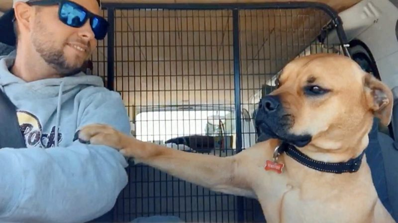 Rescued dog refuses to let go of his owner's hand because he thinks he will be abandoned again