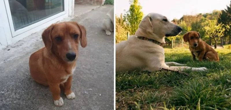 A woman lets her dog out to play and he comes back not alone but with a new little brother